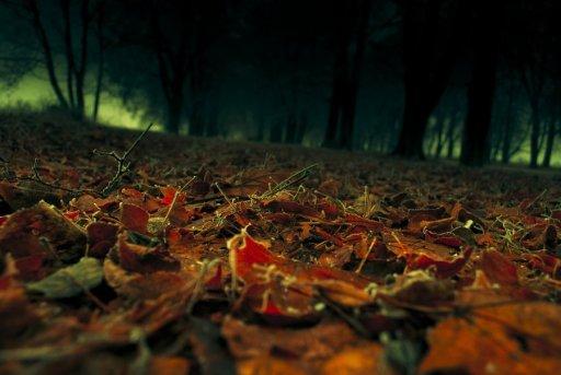 leaves_by_kr_2y_51_3k-d4gkju8